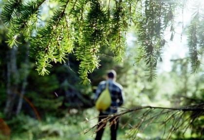 Наш відпочинок:Відпочинок у зеленому парку