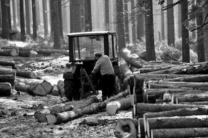 Ліс рубають, аж гай шумить.   Чому мовчить народ?