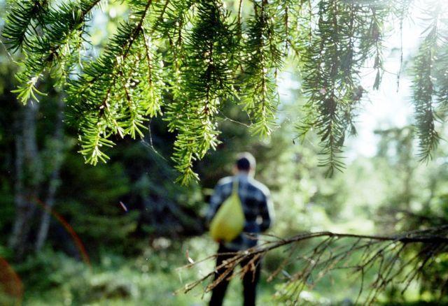 Картинки по запросу заблукати в лісі